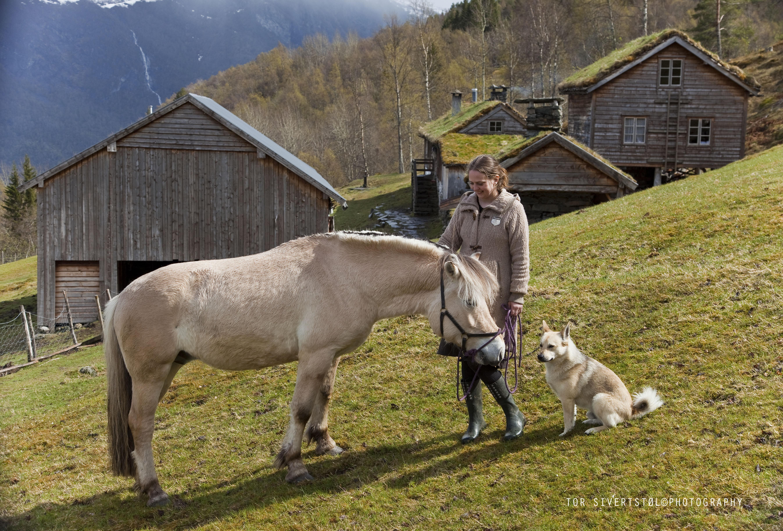 _mg_1218-ka-framfor-tun-hest-og-hund