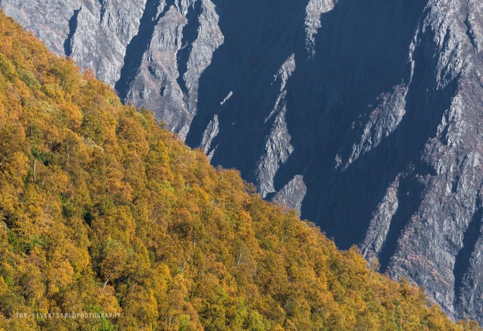skra%cc%8a-skog-mot-fjell-_v1a8661
